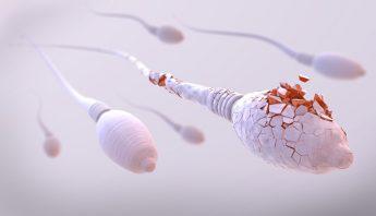 sperm cell damage