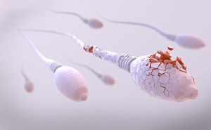 damaged sperm cell